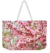 Wonderfully Delicate Pink Cherry Blossoms At Canberra's Floriade Weekender Tote Bag