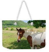 Yearling Colt In The Pasture Weekender Tote Bag