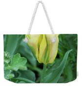 Yellow And Green Striped Tulip Flower Bud Weekender Tote Bag