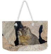 Yellow-bellied Marmot Poses For Pictures Weekender Tote Bag