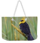 Yellow-headed Blackbird Weekender Tote Bag