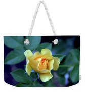Yellow Rose With Purple Contrast 0357 H_2 Weekender Tote Bag