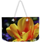 Yellow Tulip Blossom Streaked  With Red In The Spring Weekender Tote Bag