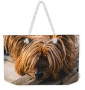 Yorkshire Terrier Biting Wood Weekender Tote Bag