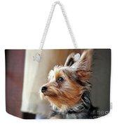 Yorkshire Terrier Dog Pose #5 Weekender Tote Bag