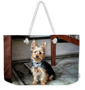 Yorkshire Terrier Dog Pose #6 Weekender Tote Bag