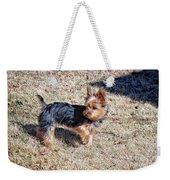 Yorkshire Terrier Dog Pose #9 Weekender Tote Bag