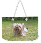 Yorkshire Terrier Is Smiling At The Camera Weekender Tote Bag