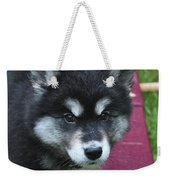 Young Alusky Puppy Standing On A Teeter Totter Weekender Tote Bag