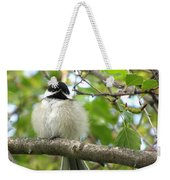 Young Black-capped Chickadee Weekender Tote Bag