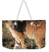 Young Bobcat 01 Weekender Tote Bag