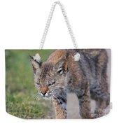 Young Bobcat 03 Weekender Tote Bag