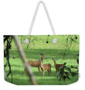 Young Buck With Two Does In The Meadow Weekender Tote Bag