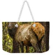 Young Bull Elk Weekender Tote Bag
