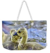 Young Canadain Goose Weekender Tote Bag