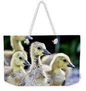 Young Canadian Goose Goslings Weekender Tote Bag