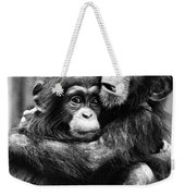 Young Chimpanzees Weekender Tote Bag