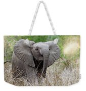 Young Elephant In The Light, Africa Wildlife Weekender Tote Bag