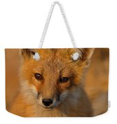Young Fox Weekender Tote Bag by William Jobes