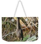Young Green Heron  Weekender Tote Bag