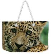 Young Jaguar Weekender Tote Bag