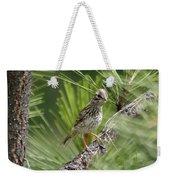 Young Lark Sparrow 3 Weekender Tote Bag