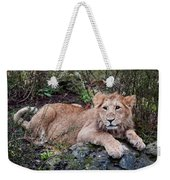 Young Lion  Weekender Tote Bag