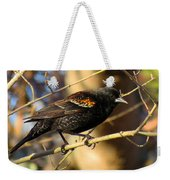Young Male Red-winged Black Bird Weekender Tote Bag