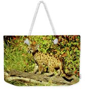 Young Mountain Lion Weekender Tote Bag