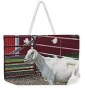 Young Old Goat White And Grayish Red Fence And Gate Barn In Close Proximity 2 9132017 Weekender Tote Bag