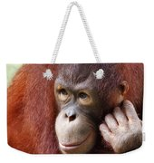 Young Orang Utan Looking Thoughtful Weekender Tote Bag
