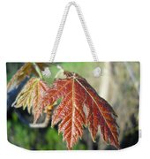 Young Red Maple Leaf In May Weekender Tote Bag