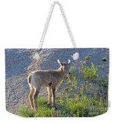 Young Rocky Mountain Bighorn Sheep Weekender Tote Bag