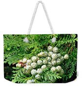 Young Seed Cones Of Lawson Cypress Weekender Tote Bag