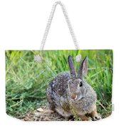 Cottontail Rabbit Weekender Tote Bag by Michael Chatt