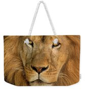 656250006 African Lion Panthera Leo Wildlife Rescue Weekender Tote Bag by Dave Welling