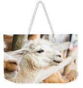 Alpaca In A Field. Weekender Tote Bag by Rob D Imagery