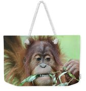 A Close Portrait Of A Young Orangutan Eating Leaves Weekender Tote Bag