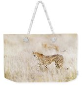 A Pair Of Cheetahs Move Steathily Through The Long Grass Of The  Weekender Tote Bag