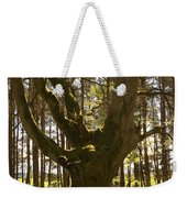 ancient tree in forest near Greenlawin Scottish Borders Weekender Tote Bag