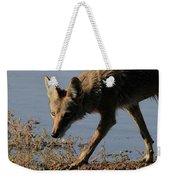 Arizona Coyote  Weekender Tote Bag