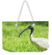 Australian White Ibis Weekender Tote Bag by Rob D Imagery