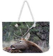 Bull Elk Grooms Himself Weekender Tote Bag