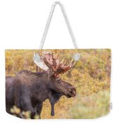 Bull Moose In Fall Colors Weekender Tote Bag
