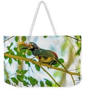 Chestnut-eared Araacari Weekender Tote Bag