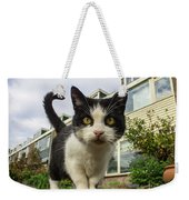 Close Up Cat On The Street Weekender Tote Bag