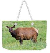Cow Elk Grazing Weekender Tote Bag