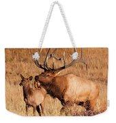 Elk And Mate In Rocky Mountain Meadow Weekender Tote Bag