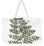 Fern Twig Illustration Grey Plant Watercolor Painting Weekender Tote Bag