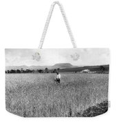 Field Of Wheat Campbell S Plains  Darling Downs Weekender Tote Bag